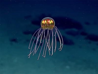 Medusa-Crossota sp